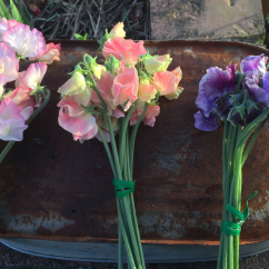 Scented sweetpeas
